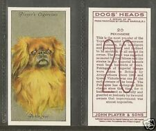 1940 Reissue Arthur Wardle Dog Art Head Player Cigarette Trade Card PEKINGESE