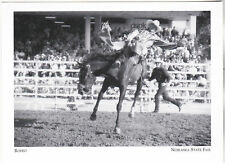"""*Postcard-""""The Rodeo"""" -Cowboy Aims for the 8-Seconds-*Nebraska State Fair (#251)"""
