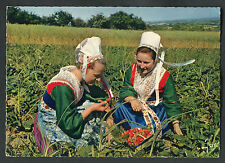 Posted 1963: Two Ladies Picking Strawberries in Traditional Costume, Brittany