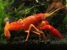 Live Aquarium Invertebrates for sale | eBay