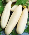 White Wonder Cucumber Seeds 50+ Vegetable Garden Heirloom NON-GMO FREE SHIPPING