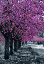 Cherry Blossom Trees Path Wall Art Grey Pink Canvas Portrait Picture Home Print