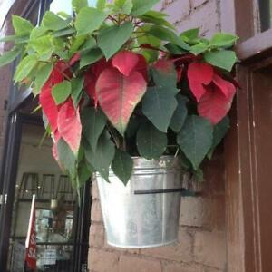 12 Pot Rings (Pot Plant Holders)