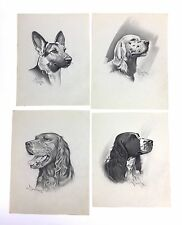 Original 1940's Illustration Art Dog Drawings by Ted E. Schrock