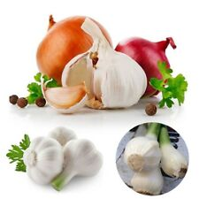 200Pcs Giant Garlic Seeds Heirloom Organic Bulb Seed Home Garden Vegetable Seed