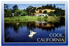 Penobscot Ranch Cool California Postcard Swans Summer Camp Water Fiber Shop