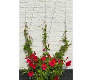 Wire Trellis Kit Climbing Plants Set Garden Wall Plant Accessories Trellises
