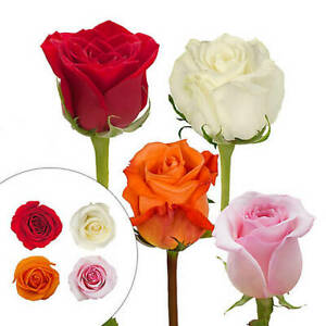 Rainforest Alliance Certified Roses, 125 Stems - Red/Pink/White/Grower's Choice