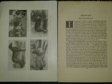 Scotch Deerhound Breed History & Photos from the 1906 Dog Book by James Watson