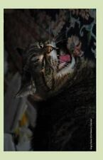 Angry Rosie 2014 Weekly Calendar : A 2014 Weekly Calendar with a Cover Photo...