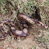 Realistic Rubber North Us Green Anaconda Snake Toy Fake Props Scary Halloween US