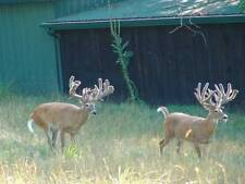 """Qty - 10 - 200"""" to 209"""" Trophy Whitetail Deer Hunts in Ohio for Corporate Group"""