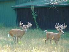 "200""- 209"" Trophy Whitetail Deer Hunt in Ohio"
