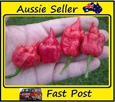 World Record Holder Hottest Pepper In World Trinidad Scorpion Chilli / 100 Seeds