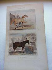 Gravure couleur 19°:Mammifères:Le cheval arabe...le cheval de labour
