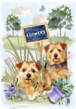 "Norfolk Terrier Dog (4"" x 6"") Blank Card/ Notelet Design By Starprint"