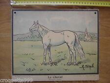 Circa 1920 Planche scolaire PERROT STAUB NATHAN le cheval solipede 20's