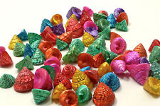 50 piece lot dyed Tectus Fenestratus Sea Shells Beach Nautical Decor Craft Shell
