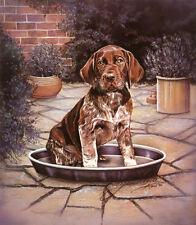 "GERMAN SHORTHAIRED POINTER GSP GUN DOG LIMITED EDITION PRINT - ""Dog's Dinner"""