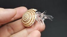 Hermit CRAB Clear Glass In Real Shell Art Glass Animal Figurine Marine Lifes