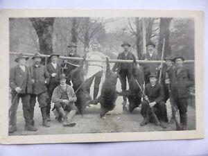 CPA chasse à tir chasseurs sangliers