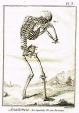 By Diderot Enclyclopedie ANATOMIE, LE SQUELETTE VU PAR DERRIERE  Engraving c1750