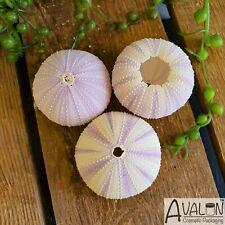 Sea Urchin LILAC 5-7cm - Pack of 3, Natural Gift Home Decor Air Plant Terrarium