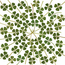 Wholesale 50p Real 4 Four Leaf Clover Irish Good Luck Charm Wedding Favors Dry L