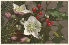 Viscum Album European Mistletoe Floral Postcard Unused