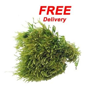 Natural Leicestershire Sphagnum Moss, 500ml Pack, Freshly Picked, Free Delivery