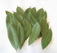 CALIFORNIA BAY LEAVES PREMIUM DRIED WILD HARVEST (40) LEAVES not Laurus nobilis