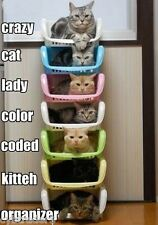 Funny Cat Organizer  Refrigerator / File Cabinet Magnet