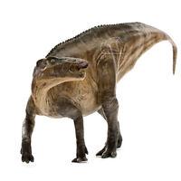 PNSO Shantungosaurus Dinosaur Model Scientific Art Hadrosaurus 15'' Figure Box