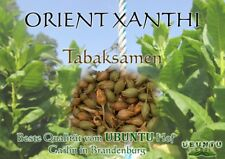 Ca.1000 Tabaksamen Orient XanthiSüßlich-leichter, nikotinarmer Tabak
