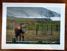 California Cow Blank Card w/ Env,