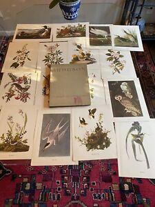 "Audubon Society Birds of America - Roger Tory Peterson - Lot of 40 Prints 9""x12"""