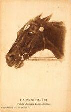 1910 Harvester World's Champion Trotting Stallion Postcard