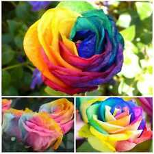 200 Pcs/Bag Multi-Color Rainbow Rose Flower Seeds Home Garden Easy Grow Plant w/