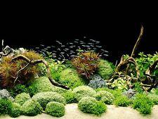 Tetra aquarium background poster fish tank décor mer 2 côtés 60x45cm