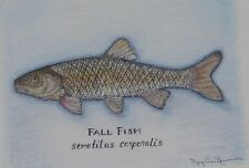 Fall Fish colored pencil pen ink drawing 5x7 print matted to 8x10