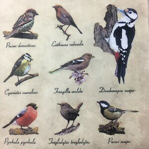 20 Paper Party Napkins Birds With Latin Names 3 Ply Luxury Tissue Serviettes