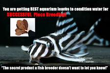 50gram Catappa Leaf-for live fish pleco zebra plecostomus tank algae plant eater