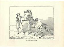 Stampa antica CAVALLO BIANCO MAMMALUCCO 1875 Old antique Print Horse Horses