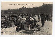 CHAMPAGNE CPA 51 Vins Vignes et thémes Vendanges le triage du raisin