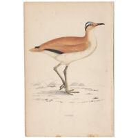 Morris Birds antique 1863 hand-colored engraving print Pl 186 Courser