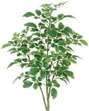 ARTIFICIAL BIRCH TREE SILK 3' PLANT ARRANGEMENT BUSH PALM FLOWER FLORAL FAKE