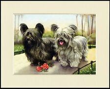 SKYE TERRIER DOGS LOVELY DOG PRINT MOUNTED READY TO FRAME