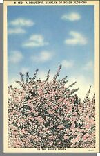 E4821: 1940's USA Post Card - Beautiful Pink Peach Blossoms in The Sunny South!