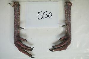 1 PAIR. WILD TURKEY FEET W/LARGE SPURS 1 1/16, 1 lot550