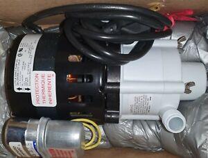 "Little Giant 2P042 1/8HP Polypropylene 115V Magnetic Drive Pump 1"" FPT"
